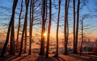 Se balader dans les bois