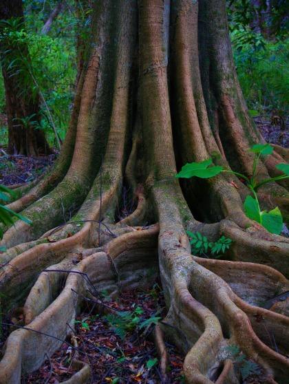 tree-3179704_1920